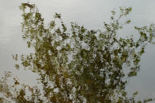 l'eau et les reflets,le rhin,vense,étang,fleuve