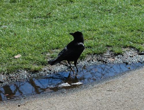 oiseau, 2.jpg