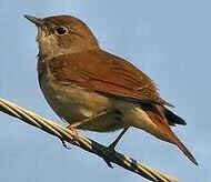 henri pichette,nom des oiseaux,chant des oiseaux,litanie