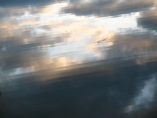 reflets dans l'étang.jpg