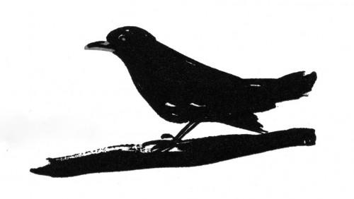 fabienne raphoz,oiseaux,merle
