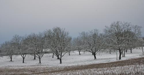 sergueï essenine,journal d'un poète,première neige,forêt
